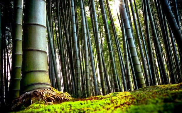 nature_bamboo_plants_1920x1200_43624-1024x640